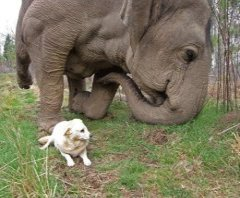 BEAUTIFUL FRIENDSHIP