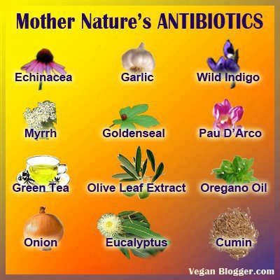 Alternative Medicine And Herbal